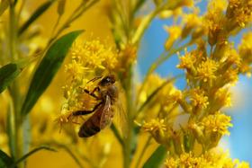 Garden Ideas: Birds, Bats & Bees